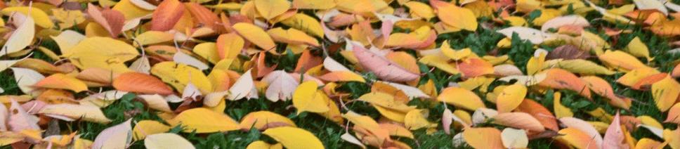 feuilles long