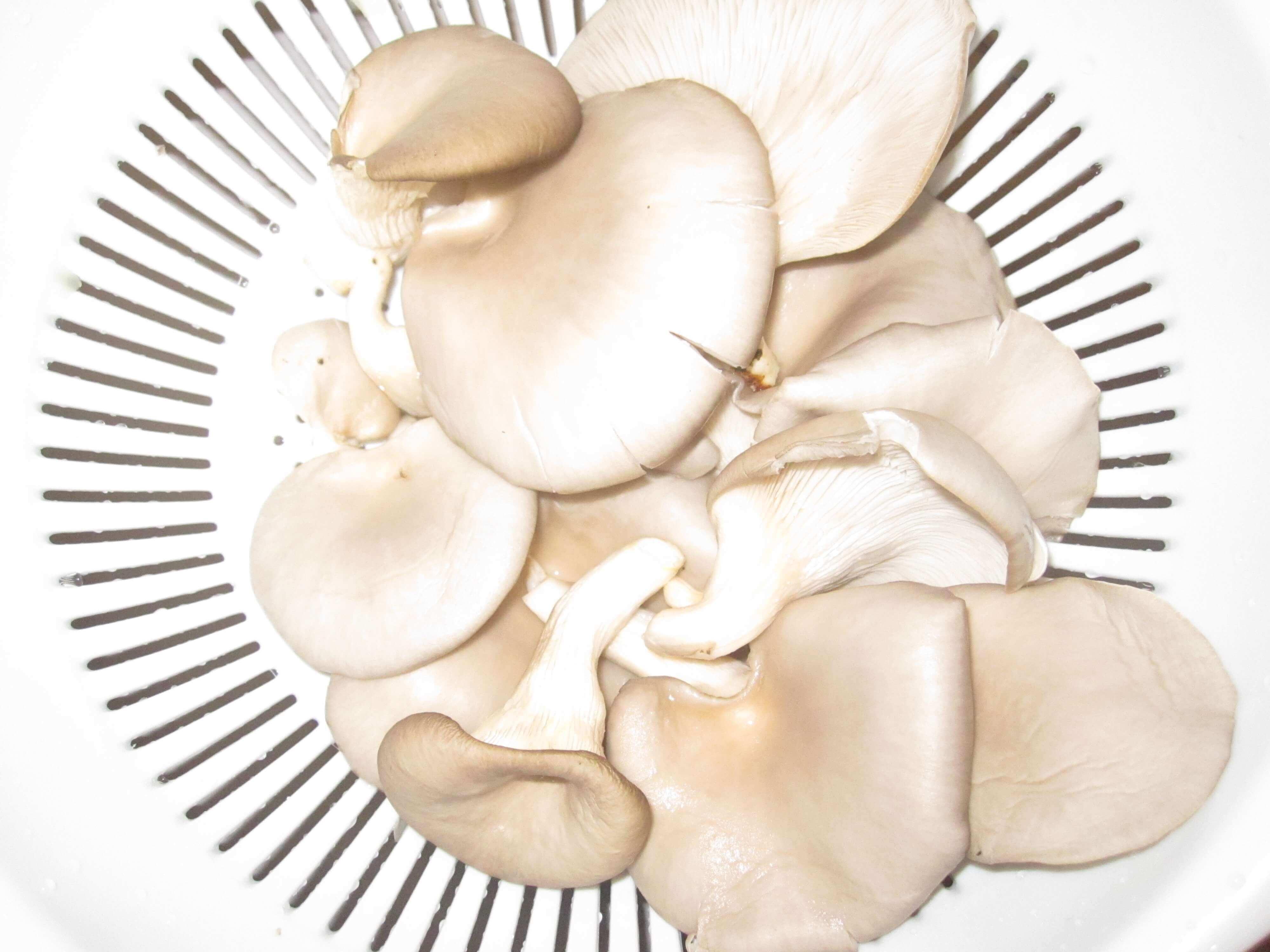 Initiez-vous à la champiculture avec Trivial'Compost!